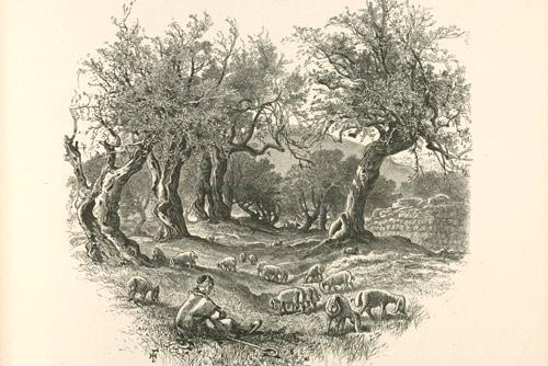 L'olio di oliva a Roma e nel Lazio
