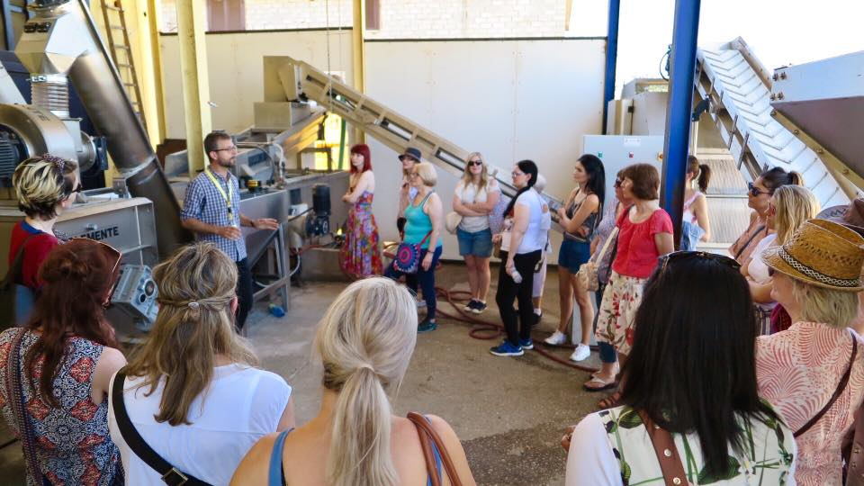 Olive mill and olive oil tasting tours from Rome - central Italy. Available all year