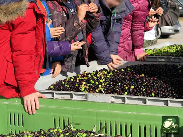 Impariamo a conoscere le olive