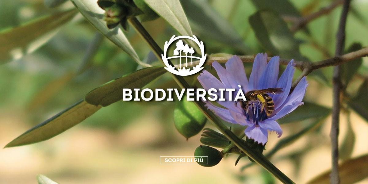 Rispetto dell'ambiente e della biodiversità
