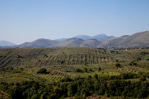 La lotta guidata ai parassiti dell'olivo in Sabina: migliora l'ambiente, risparmiano le aziende
