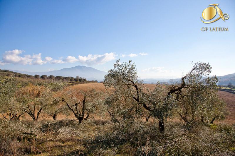 Recupero degli oliveti abbandonati e salvaguardia del paesaggio agrario tradizionale