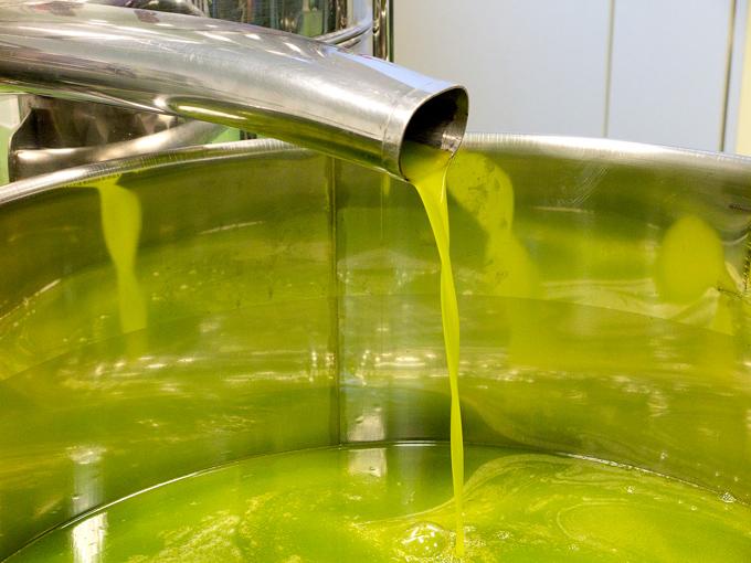 Attributi sensoriali positivi e negativi dell'olio da olive