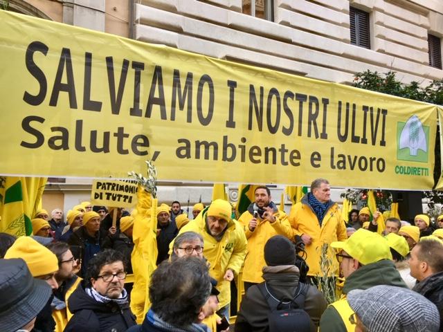 """Da Coldiretti la proposta di un piano """"Salva-olio"""" per rilanciare il settore olivicolo italiano"""
